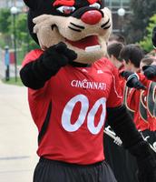 Cincinnati's Mascot, the Bearcat