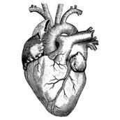 Cardiomyopathy - The Heart Muscle Disease