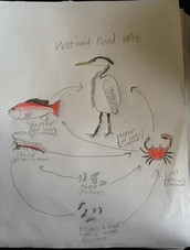 Wetland food web
