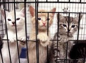 These are ONLY KITTENS!!