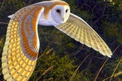 ---6 i wont to hold a owl