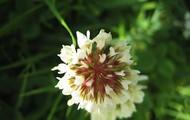 Eerste bloem