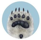 Polar bears paw