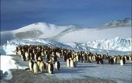 Migration penguin