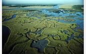 Flordia Everglades