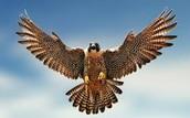 Falcon Ind.