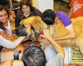 Thursday May 5th Dog Therapy