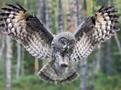 Owl,Coyote,Mountain Lion