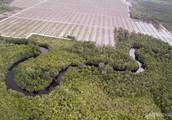 Environmental Devastation