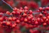Since Brian taste these berries, it taste bitter.