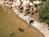 Flamingo River