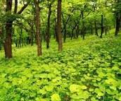 plants in taiga