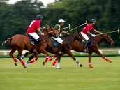 What is Polo?