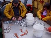 Fisheries Scientist