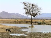 Africa's Lack of Water