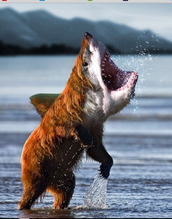 Regarde BearShark!!!!!!!!!!!!!!!!!!!!