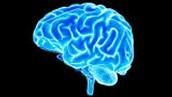 Cognitive Behavior