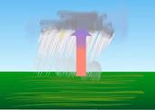 Rain Forest Climate