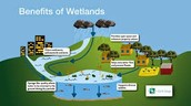 A Wetlands cycle