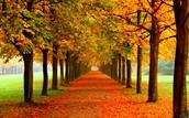 We are Autumn!