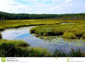 Landscapes in the wetlands