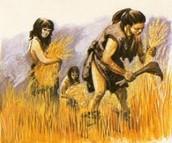 Gathering wheats
