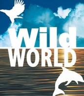 WildWorld B.V.