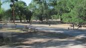 pecan valley park