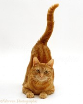 Why do cats move their tail so much?