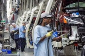 What is the most popular jobs for the Dominican?