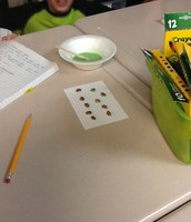 Gluing beans on our index card