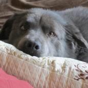 My Dog Mylie