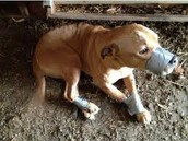 Abused animal