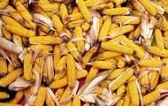 Corn husking bees