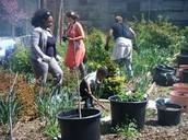 The Community Garden!