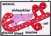 Gezonde werking van de alvleesklier