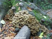 Fungi is a Great Way to Decompose Organisms.