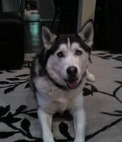 GREY is going!  Help people, Help pets!