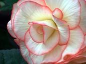 southwest flower