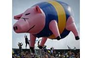 Pig Racing