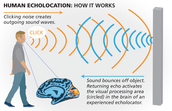 How echolocation works in humans.