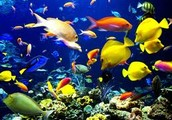 How many species of animals are in the ocean