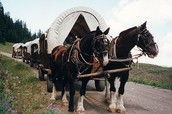 Wagon With Horses
