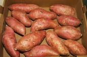 Sweet Potato Sales