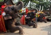 Thailands known Animal