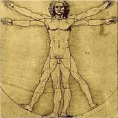 Vitruivian Man