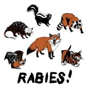How Rabies is Caused & Spread