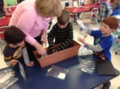 We planted our seedlings from our  Jack and the Beanstalk lessons - they were all sprouted :)