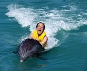 riding the dolphins
