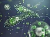 ¿Qué debemos saber de los protoctistas?